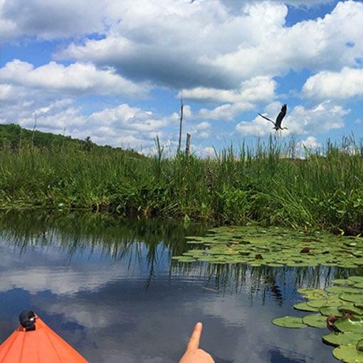 kayak rentals Rhinebeck NY